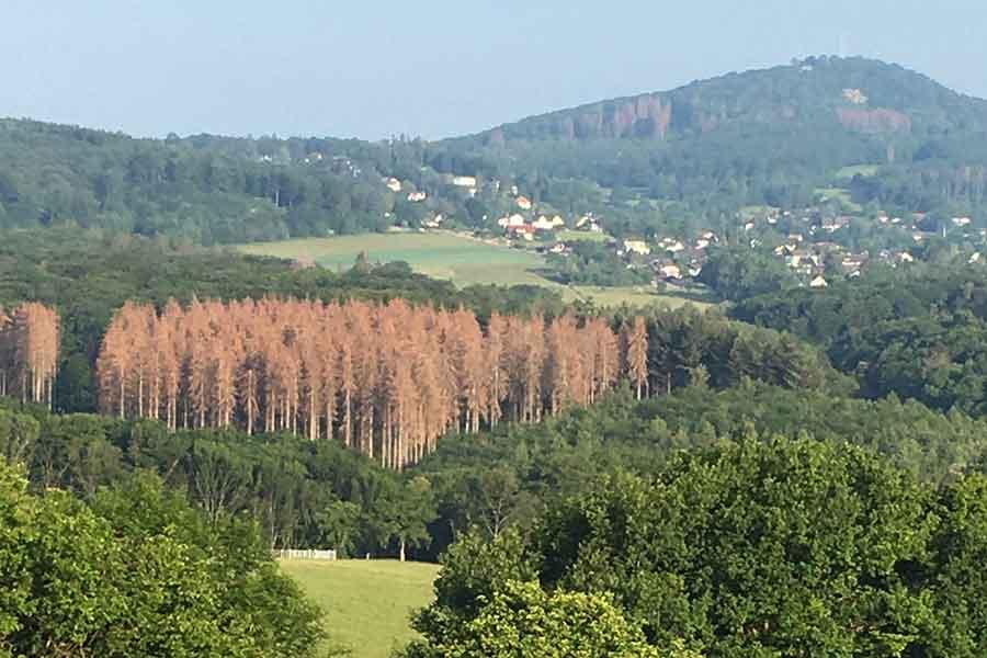 wald - CDU lädt zum Waldspaziergang ein